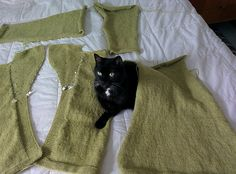 Ravelry: overporcelain's Sweater