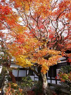 もみじ by bluegreen405 on Flickr.