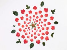 Fong Qi Wei  Exploded Flowers