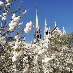 Flowers for Notre Dame - Copyright Carla Coulson