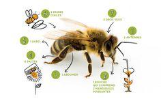 Math For Kids, Zoology, Bee Keeping, Animals For Kids, Montessori, Explorer, Distance, Homeschool, Honey