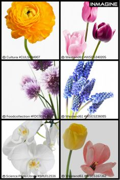 Floral beauties in close up! View more here http://bit.ly/1vucMII #flowers #floral #closeup