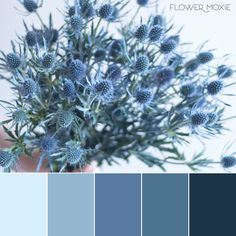 Dusty Blue Wedding Flower Moxie DIY wedding flowers grey and steel wedding palette thistle thistle bouquet. Steel Blue Weddings, Dusty Blue Weddings, Blue Colour Palette, Colour Schemes, Color Palettes, Blue Wedding Flowers, Wedding Colors, Blue Wedding Flower Arrangements, Blue Wedding Decorations