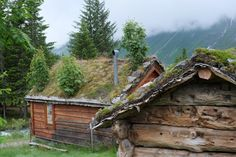 Sod Roof with Trees | AAORTW
