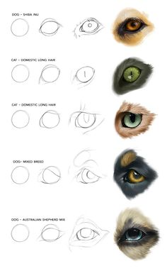 Join Devin Elle Kurtz on Patreon to get access to this post and more benefits. Digital Painting Tutorials, Digital Art Tutorial, Art Tutorials, Pencil Art Drawings, Art Drawings Sketches, Animal Drawings, Dog Drawing Tutorial, Arte Elemental, Arte Equina