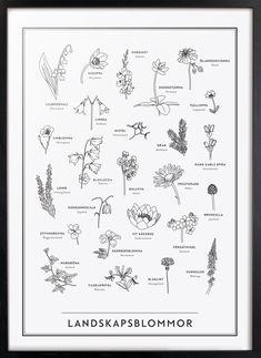Landskapsblommor - Kunskapstavlan