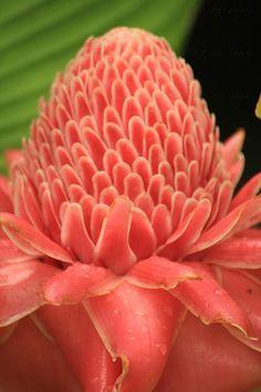 Farb-und Stilberatung mit www.farben-reich.com - Coral beauty