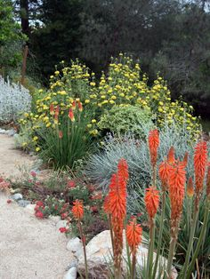 Lovely Xeriscaping: A xeriscaped sustainable driveway is surrounded with Jerusalem sage and red-hot poker, which add a pop of red and yellow color. From HGTV.com's Garden Galleries