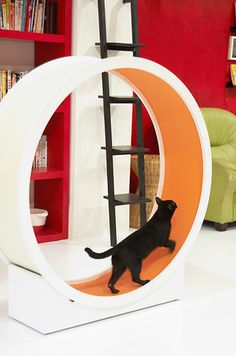 36 Pieces Of Mod Pet Furniture Nicer Than Your Actual Furniture. Would LOVE this cat wheel in den! #cats #CatWheel @Tiffany Golota