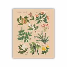Rifle Paper Co. Peach Herbs & Spices Art Print - 11x13 by Rifle Paper Co. | Florals & Botanical Gifts | chapters.indigo.ca