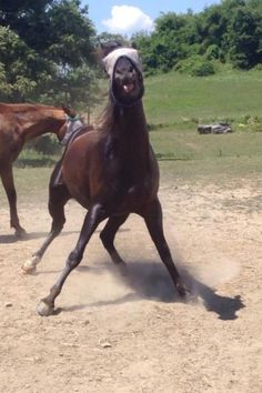 "Silly Horse in Fly Mask: ""Nananana booboo, catch me if you can! Funny Horse Pictures, Funny Horses, Cute Horses, Horse Love, Funny Animals, Cute Animals, Funny Equine, Pretty Horses, Most Beautiful Animals"