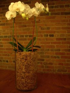 Orchid makeover!