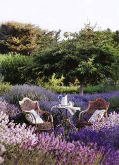 field of purple flowers. wicker furniture ~ pitcher ~ outside ~ bright & beautiful.