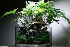 No Aqua Terrarium with Ferns