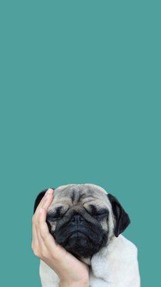 Pug wallpaper Pug wallpaper wallpaperpinteres… Source by WallpaperHDPhone Wallpaper Pug, Tier Wallpaper, Animal Wallpaper, Iphone Wallpaper, Wallpaper Gatos, Seagrass Wallpaper, Paintable Wallpaper, Colorful Wallpaper, Fabric Wallpaper