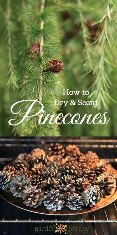 Make Scented Pinecones for a pretty home diffuser.