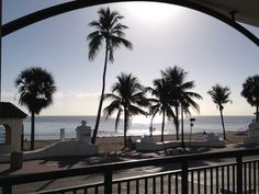 Picture Perfect! Taken from Marriott Vacation Place, on Ft. Lauderdale Beach Florida Palm Trees, Palm Tree Pictures, Vacation Places, Wallpaper, Beach, Water, Outdoor, Gripe Water, Outdoors