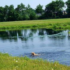 Zwemmen 29 mei '17