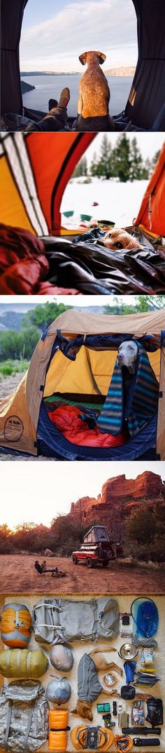 exPress-o: Camping with dogs