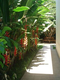Plantas para Jardim Delicadas e Impo. Tropical Garden Design, Tropical Backyard, Tropical Landscaping, Tropical Plants, Landscaping Ideas, Tropical Gardens, Backyard Ideas, Mulch Landscaping, Tropical Style