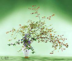 ほんのりと色づいたどうだんつつじが秋の気配を感じさせます。とりかぶとの深い紫色は私の大好きな色。秋風がさっと吹き抜けるようなイメージでいけました。 花材:どうだんつつじ、とりかぶと 花器:ガラス花器(岩田久利) The subtly colored enkianthus perulatus hints at autumn. Deep purple of monkshood is my favorite color. The scenery represents the sweeping autumn wind. Materials:Enkianthus perulatus, Monkshood Container:Glass vase  #ikebana #sogetsu