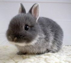 Almost as cute as my bunny! :D