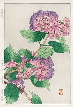 Hydrangea from Shodo Kawarazaki Spring Flower Japanese Woodblock Prints Japan Illustration, Japanese Art Styles, Japanese Prints, Nature Prints, Art Prints, Block Prints, Linocut Prints, Oriental Flowers, Japanese Painting