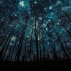 Starry galaxy sky stars stargazing  Forest silhouettes | photo by ©Harry Finder #earthfocus @CampingOfficial