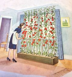 Vintage image from WW2 Victory Garden pamphlet about indoor gardening over the winter.  theyarden.com