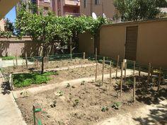 Ürünlerimi yetiştirdiğim 40m karelik küçük bir alan! #domates #salatalık #patlican #biber #tere #roka #maydanoz #havuç #patates #soğan #çilek #karpuz #erik #yenidünya #incir #ayva #üzüm ve #mandalina bu bahçede yer almaktadır!!!