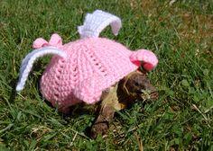 Flying pig tortoise cozy.. For deg som har skilpadde som kjæledyr... ;)