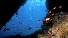 7 Caribbean Dive Spots You Can Access Without Scuba Gear