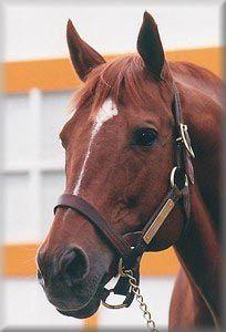 Profile of Greatness: Secretariat