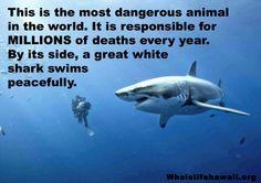 Dangerous Animal !