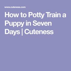 How to Potty Train a Puppy in Seven Days | Cuteness