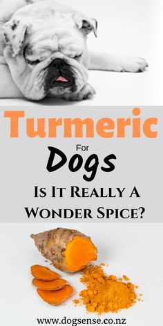 Dog health tips. What are the benefits of turmeric for dogs? Will it cure cancer and arthritis? Everything you need to know about this orange wonder spice. All About Puppies, Best Puppies, Dog Health Tips, Pet Health, Dog Grooming Tips, Huge Dogs, Diabetic Dog, Best Dog Training, Dog Care Tips