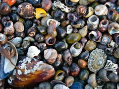 Close up picture of beach full of beautiful shells in Northern Norway