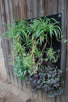 The Green Pockets wall planter #thegreeenpockets #verticalgarden #wallplanter