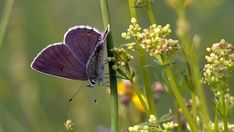 Butterflies, Insects, Nature, Animals, Beautiful, Naturaleza, Animales, Animaux, Butterfly