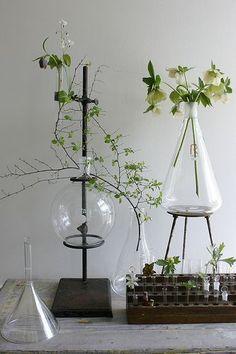 IDE: begerglass, erlenmeyerkolbe som vaser