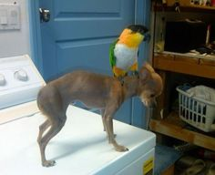 animal friendship031