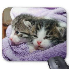 #customized - #Cat Mouse Pad