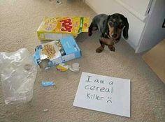 Cereal Killer!!!