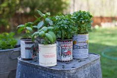 recycled cans for potted kitchen herbs