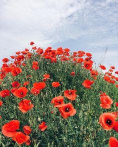 Poppy seed. Hello June! // Na spacerze znalazłam całą górkę maków - jakie to piękne! Witaj czerwcu 🌾❤️ #maki#poppyseed#nature#naturelovers#spring#wiosna#flowers#flowerstagram#flowersofinstagram#flowerslovers#flowerstyles_gf#flowermagic#flowerslovers#bluesky#perfection#minimal#simplicity#colours#walk#walking#perfectmoment#momentsofmine#nothingisordinary#thatsdarling#goodmorningworld#goodvibes#visualoflife#pictureoftheday#ig_captures#vscodaily#tv_living