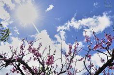 Primavera [San Mateo]