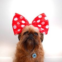 Bows will make you look AND feel pretty. | 29 Style Lessons From Instagram's Most Fashionable Puppies