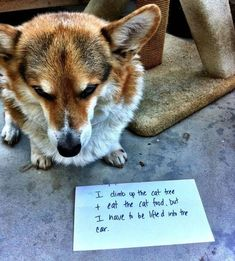 30 Funny Dog Pictures #funnydogs
