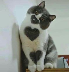 love - your daily dose of funny cats - cute kittens - pet memes - pets in clothes - kitty breeds - sweet animal pictures - perfect photos for cat moms Baby Animals Super Cute, Cute Baby Cats, Cute Little Animals, Cute Cats And Kittens, Cute Funny Animals, Kittens Cutest, Cute Babies, Pretty Animals, Funny Kittens