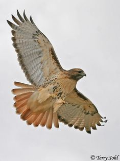 HAWK is my Winged Spirit Guide.  Let me help you discover yours! www.debbowen.com